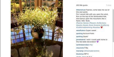 en la siguiente retrató un jarrón con flores. Foto:vía instagram.com/littleirishcat