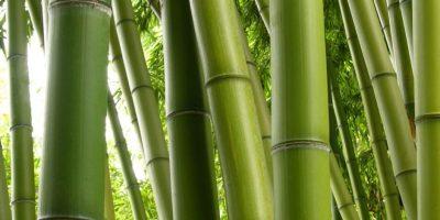 Consistía en amarrar a una persona de pies y manos. Con un bambú creciendo debajo. Foto:vía Getty Images