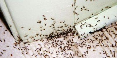 Asimismo, las hormigas también atacan a viajeros desprevenidos al meterse por sus cavidades corporales. Esto pasó con un viajero en un safari africano. Foto:vía Tumblr