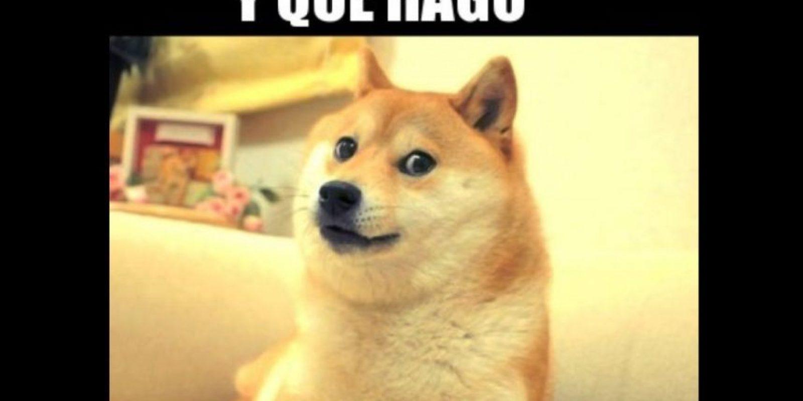 Es un perro Akita con profunda expresión de tristeza. Foto:vía Twitter