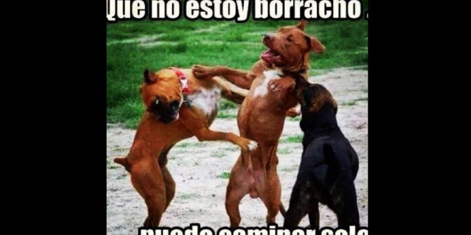 Fotos viralizadas desde 2012. Foto:vía Colombianadas.net