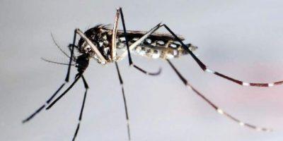 La cifra de fallecidos por dengue se sitúa en 95