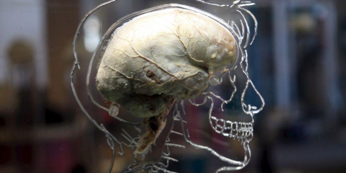 Infografía: 16 datos sorprendentes de cómo funciona el cerebro humano