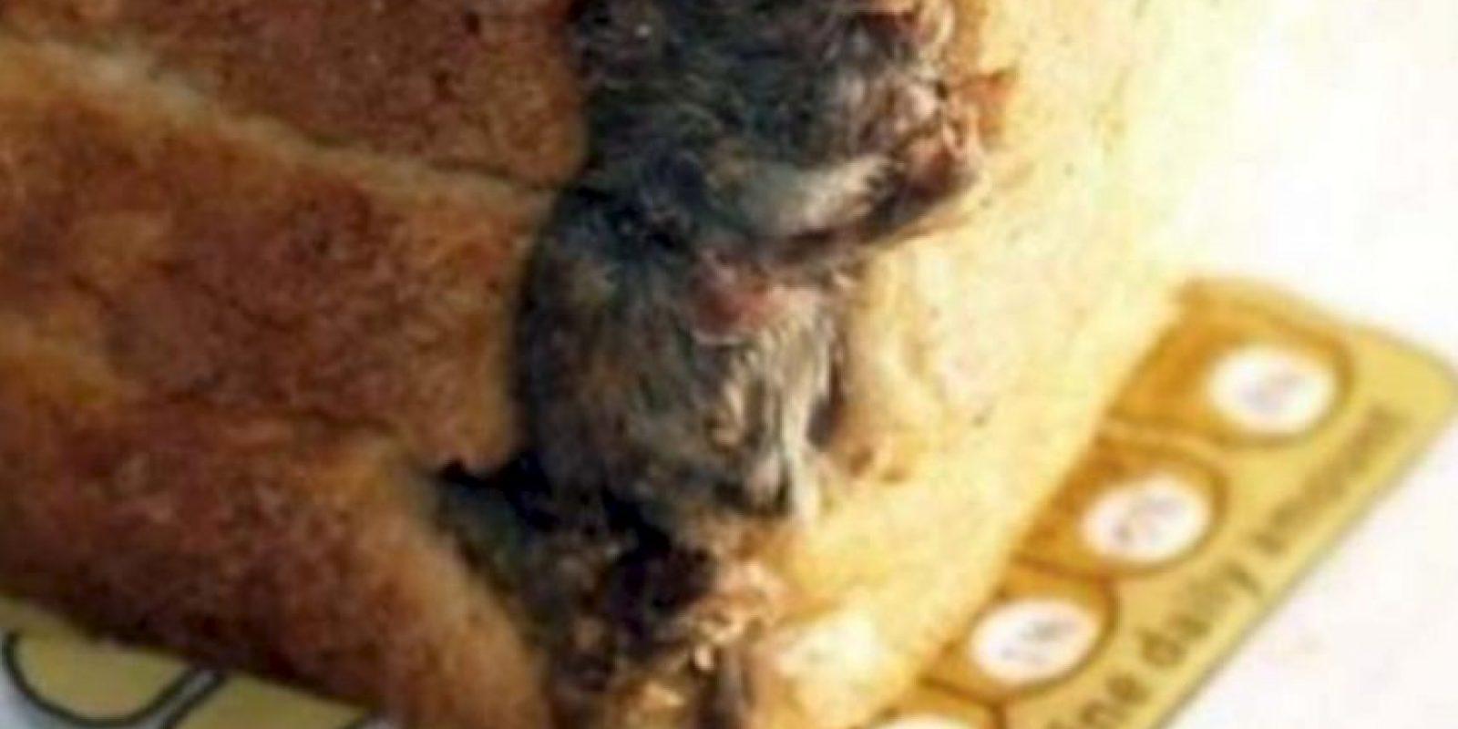Esta rata aquí. Foto:vía EpicFail.com
