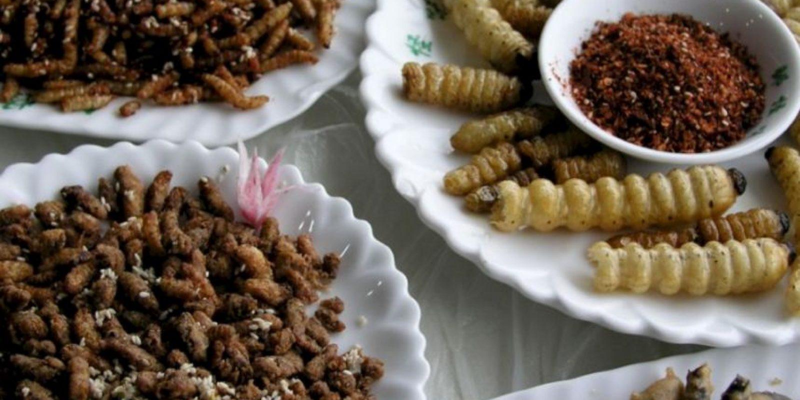 Video: 7 tutoriales para cocinar insectos y gusanos que los horrorizarán Camren Brantley-Rios se hizo famoso comiendo 30 días insectos. Foto:vía Tumblr