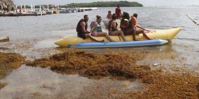 República Dominicana llama a licitación para enfrentar invasión algas de sus playas