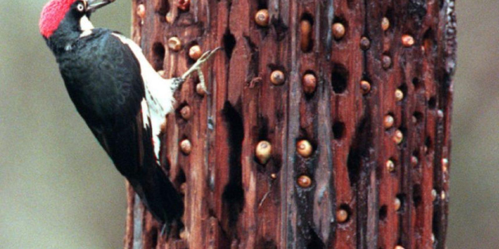 También las rechazó. Foto:vía Tripofobia.com