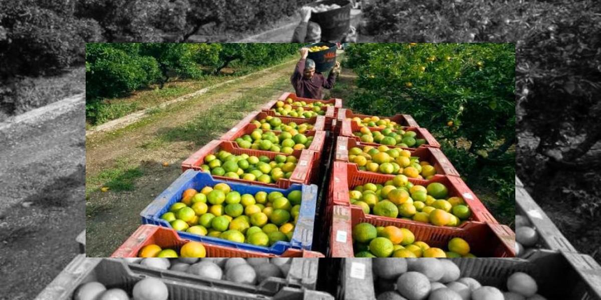 Adoexpo destaca veda a productos hospederos de la mosca oriental de la fruta