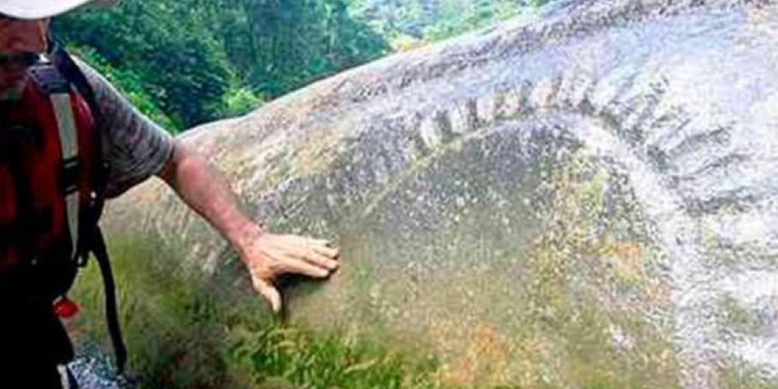 1. Selva de La Mosquitia en Honduras Foto:Twitter.com