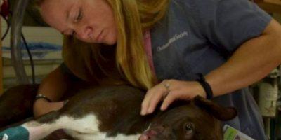 Arrestaron a quien le hizo eso. Foto:vía Asociación de Animales de Charleston