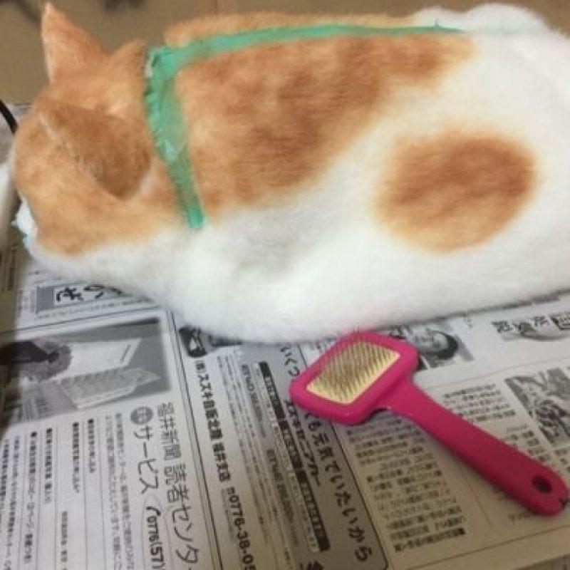 Pueden peinarlas como a los gatos reales. Foto:Vía Ameblo.jp