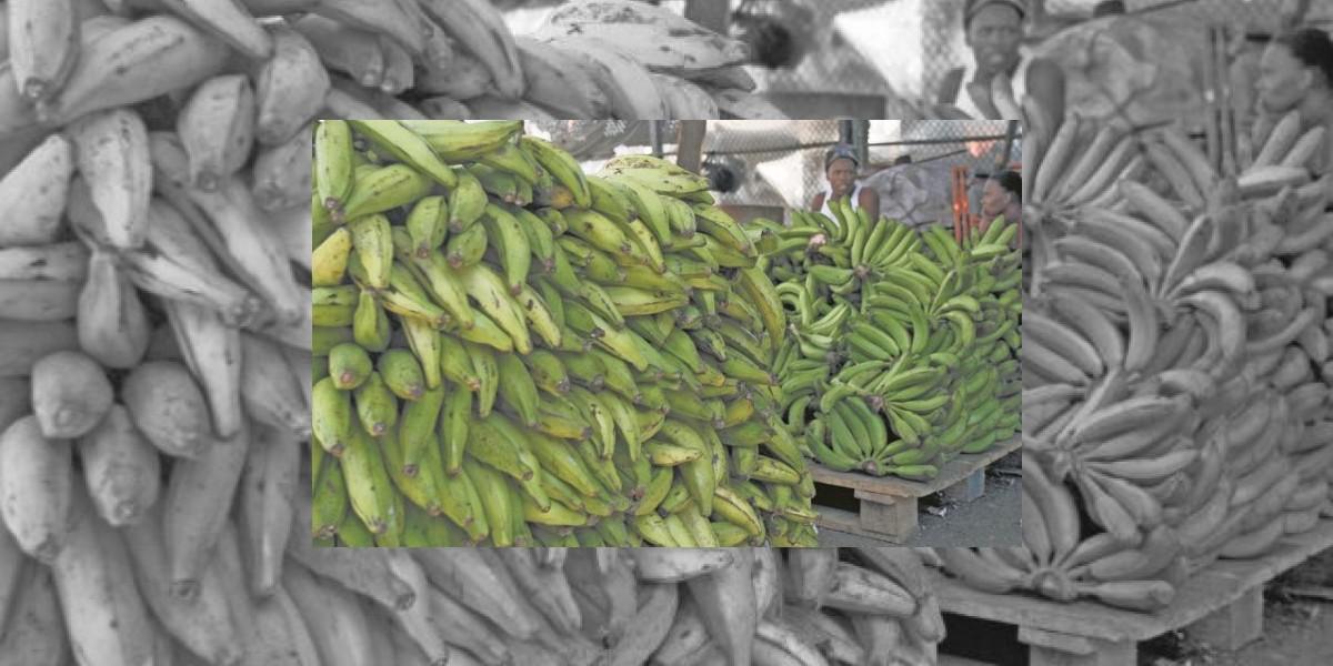 Vienen congelados: Este viernes llegará la primera importación de plátanos