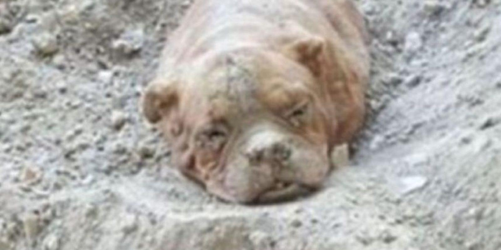 Esta perra fue enterrada viva por su dueño en Francia. Foto:vía Facebook