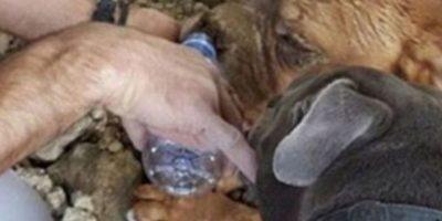 Tenía 10 años y artritis. Un hombre llamado Pedro Dinis fue el que la encontró, gracias a su perro. Foto:vía Facebook