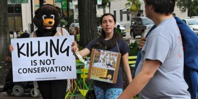 Inicia temporada de caza y matan a más de 200 osos en un día en Florida