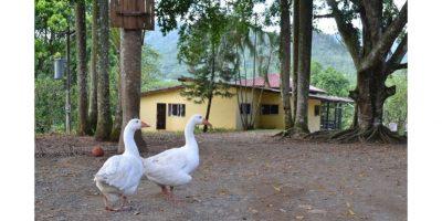 Balacera: En Loma  Mala nadie sabe nada