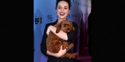 Katty Perry Foto: Getty Images