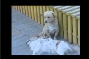 También con sus amigos perros Foto:Vía Youtube