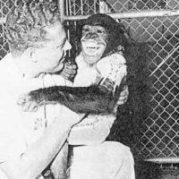 Después de otros intentos fallidos el primate llamado Ham regresó con vida a la Tierra en 1961 Foto:Vía nasa.gov