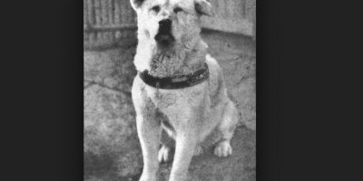 1. Hachiko: El perro acompañaba a su dueño todos los días hasta la estación del tren en Tokio y volvía para recibirlo. Un día su amo sufrió un paro cardiaco y no regresó. Foto:Vía Wikimedia.org