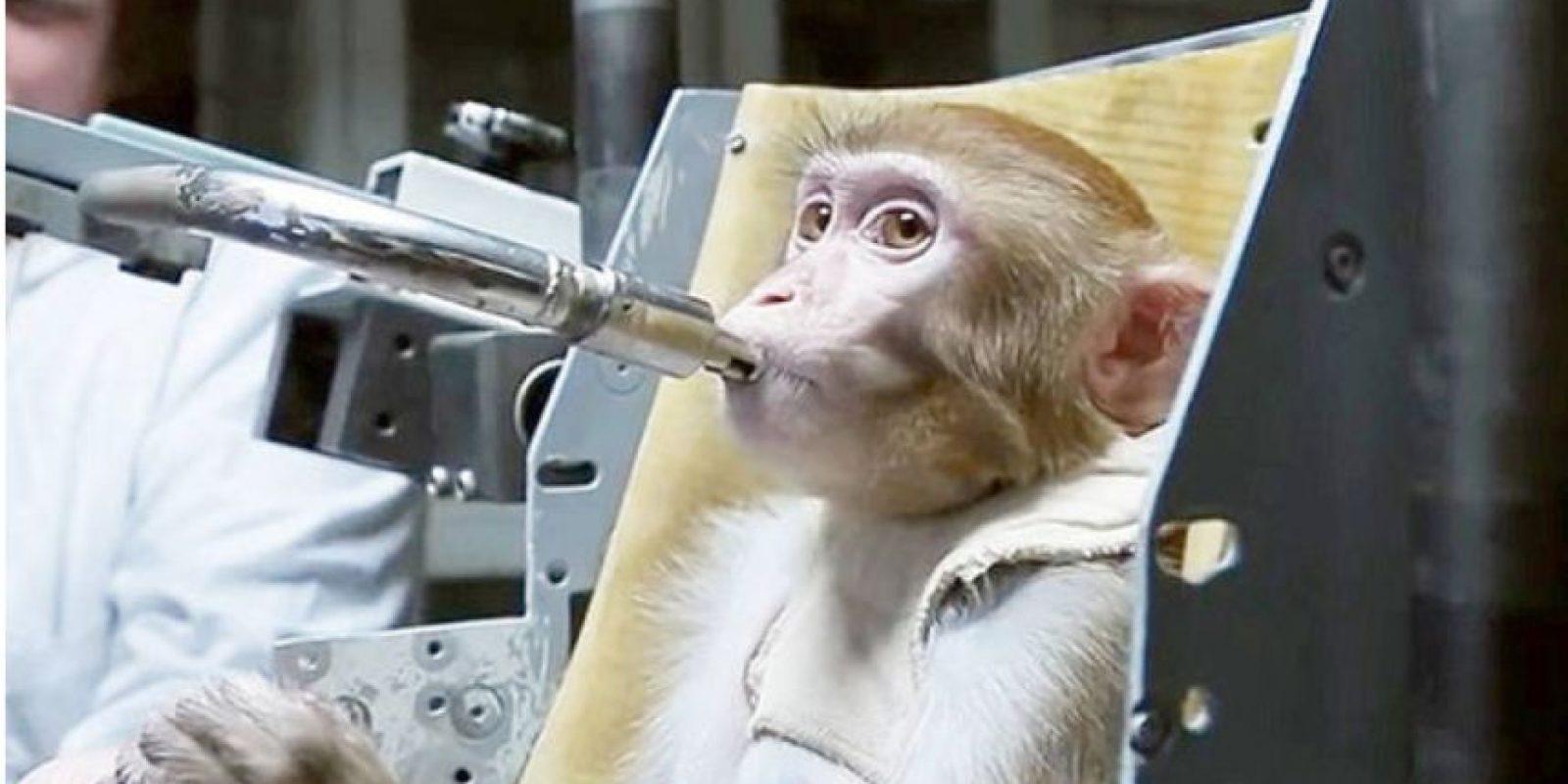 Los macacos rhesus entrenados en Rusia podrían ser la primera especie en pisar Marte. Foto:Vía Youtube.com/tvroscosmos