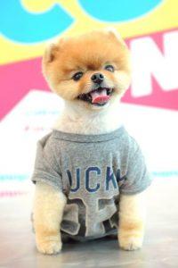 """Jiff"", oto perro celebridad de la red Foto:Getty Images"