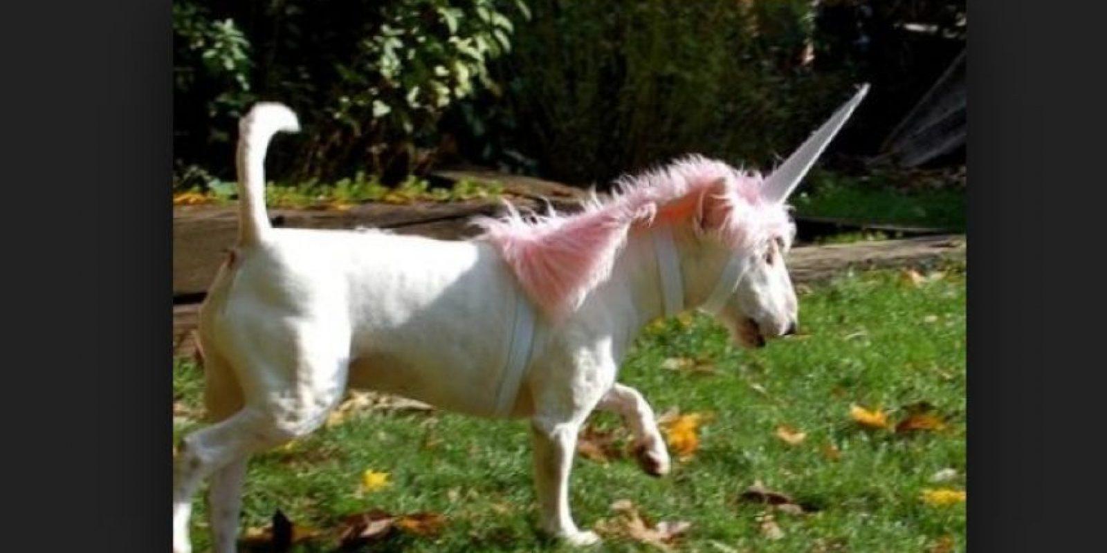 """No hay nada más extraño que ver a un """"unicornio"""" correr en la pradera. Foto:Tumblr.com/Tagged-costumes-pets"""