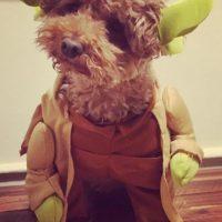 A Yoda no le gustó para nada ser Yoda. Foto:Vía Instagram