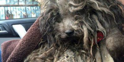 Una mascota, un animal es una inversión. Foto:vía Pawsnee