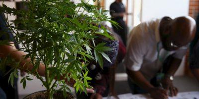 """La """"ley sobre estupefacientes, sustancias psicotrópicas, drogas de uso no autorizado, legitimación de capitales y actividades conexas"""" del año 2002 sanciona penalmente la distribución y venta del cannabis. Foto:Getty Images"""