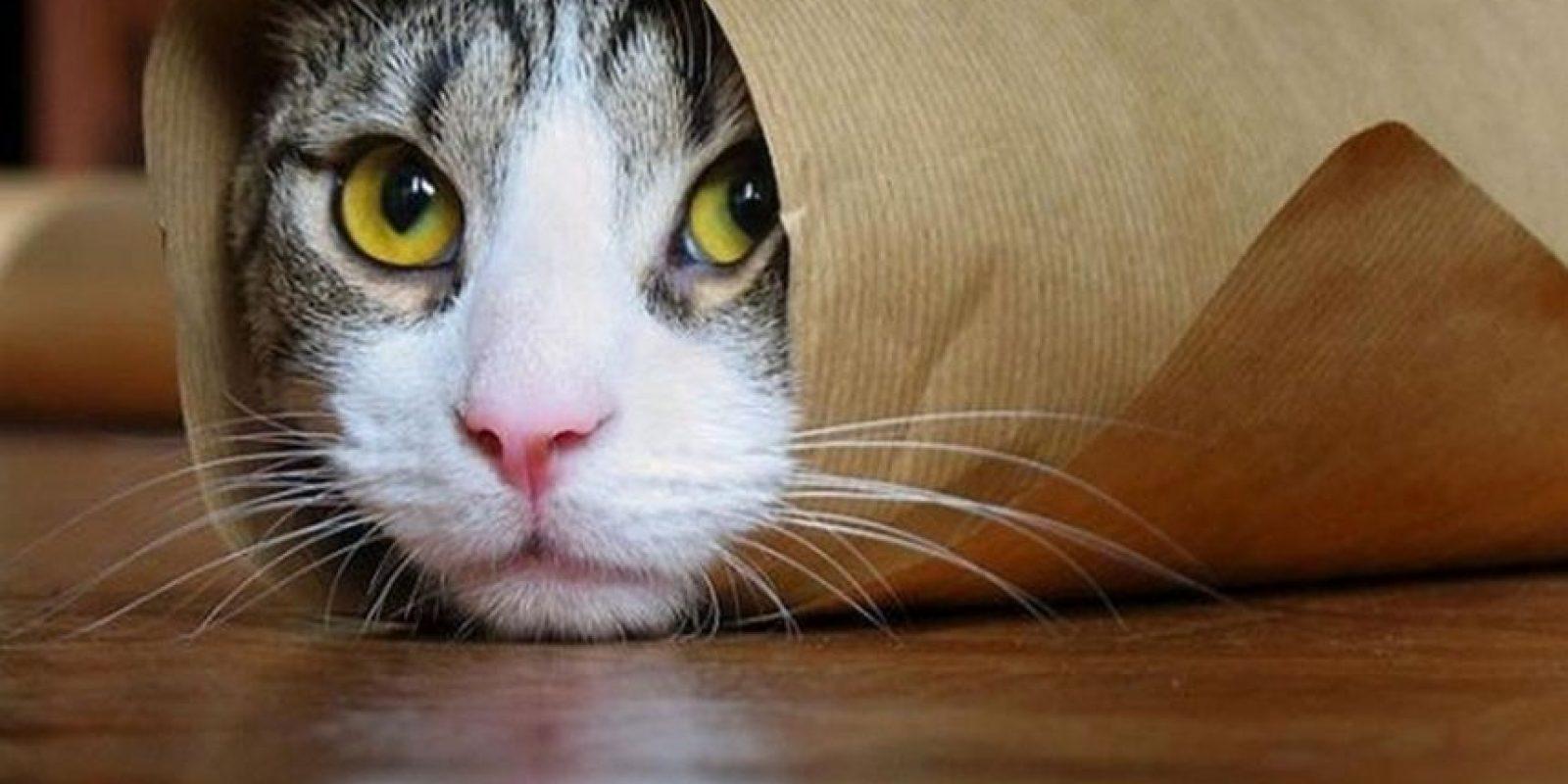 Estos gatos también pasaron por situaciones incómodas Foto:Pixabay
