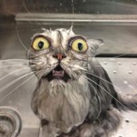 ¡Jabón no! Foto:Vía Youtube