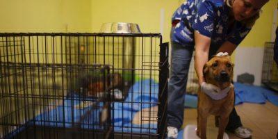 """""""Adoptar un animal es una gran decisión y una responsabilidad de más de 15 años en muchos casos"""", informa la organización AnimaNaturalis. Foto:Getty Images"""