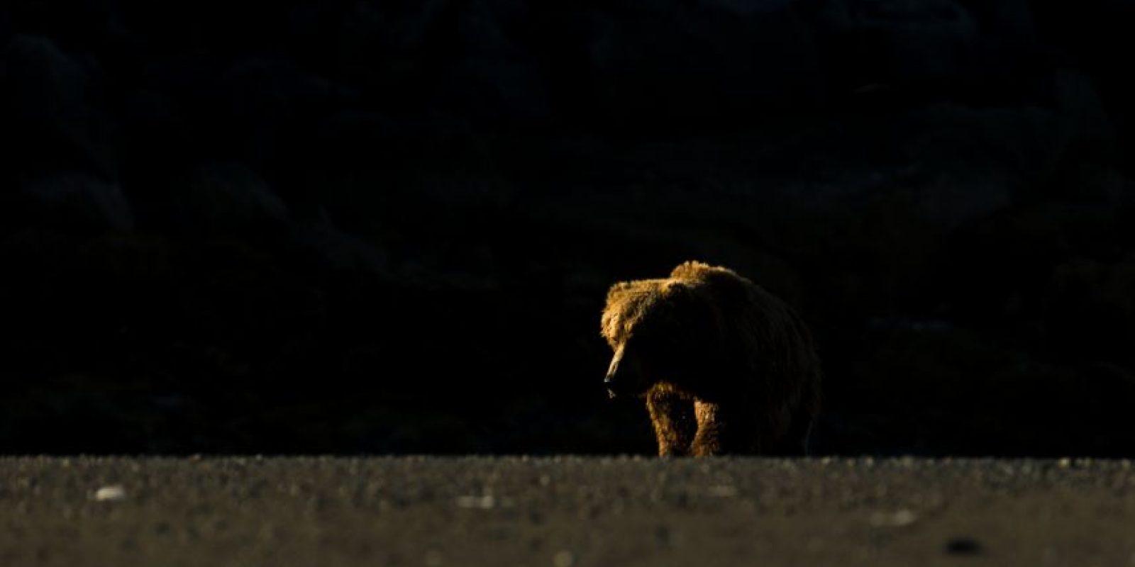 """""""Bear into the light"""" Foto:Mario Dávalos"""
