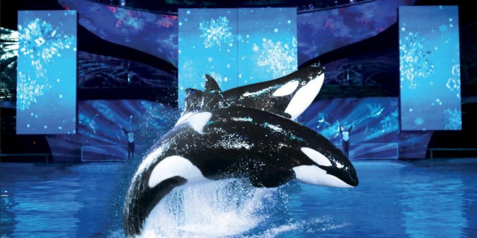 Estos animales pueden llegar a medir hasta siete metros (22 pies). Foto:Vía facebook.com/SeaWorld