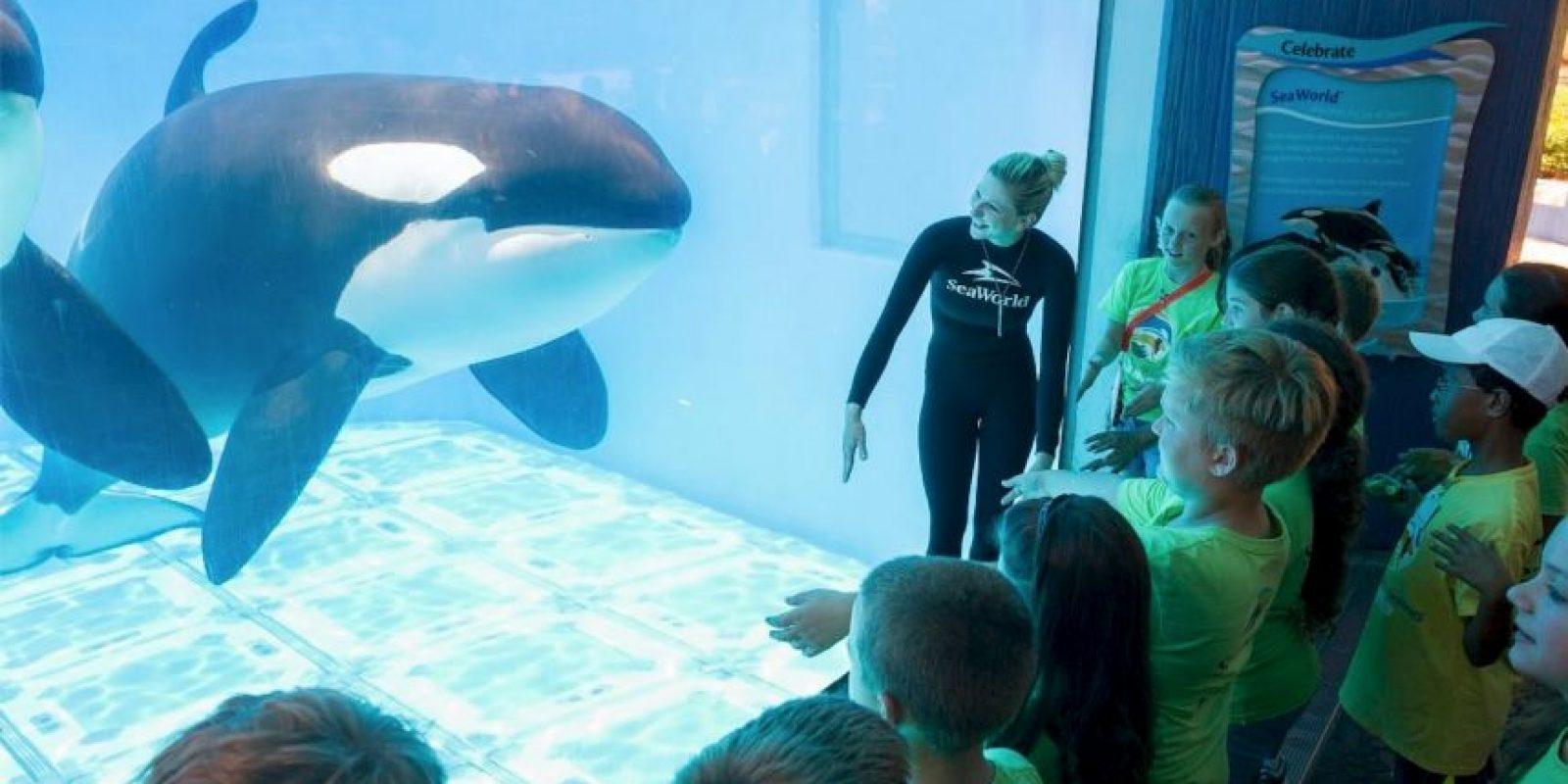Es por eso que la decisión del parque ha sido muy bien aceptada. Foto:Vía Facebook SeaWorld