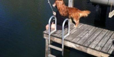 El perro no está pescando. Foto:Reddit