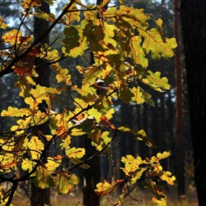 "Bosques que parecen ""encantados"" Foto:Pinterest"