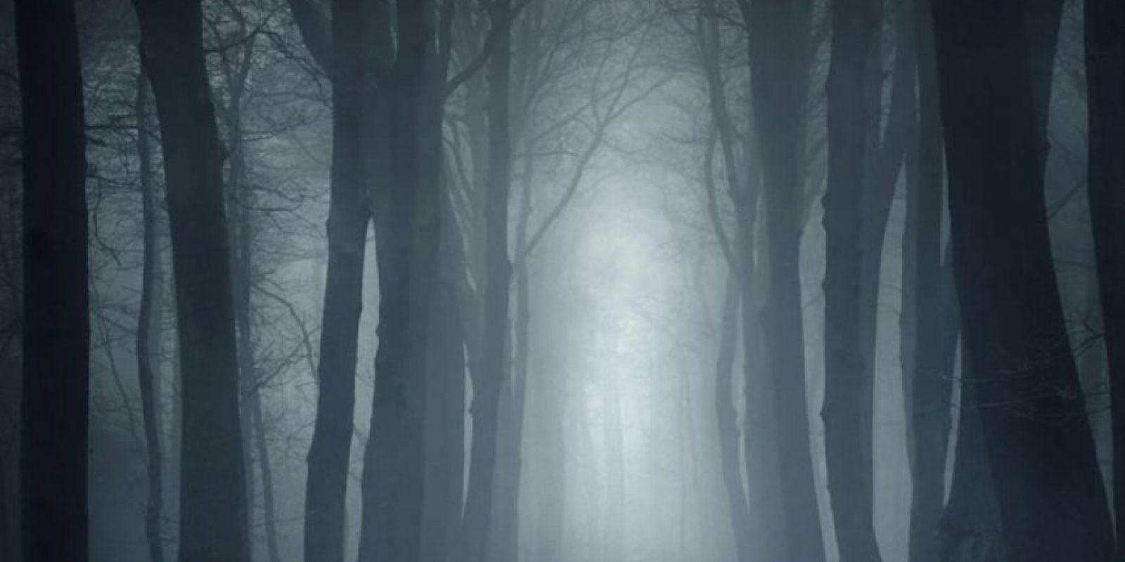 "Bosques que parecen ""encantados"" Foto:Wikimedia"