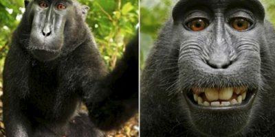 El famoso selfie del mono Foto:Instagram