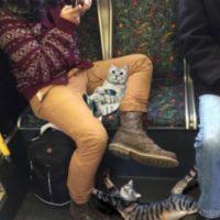El cual se burlaba de esta forma de sentarse de los hombres, colocando con Photoshop gatos entre sus piernas.