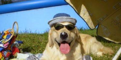 cachorritos en situaciones graciosas Foto:Imgur