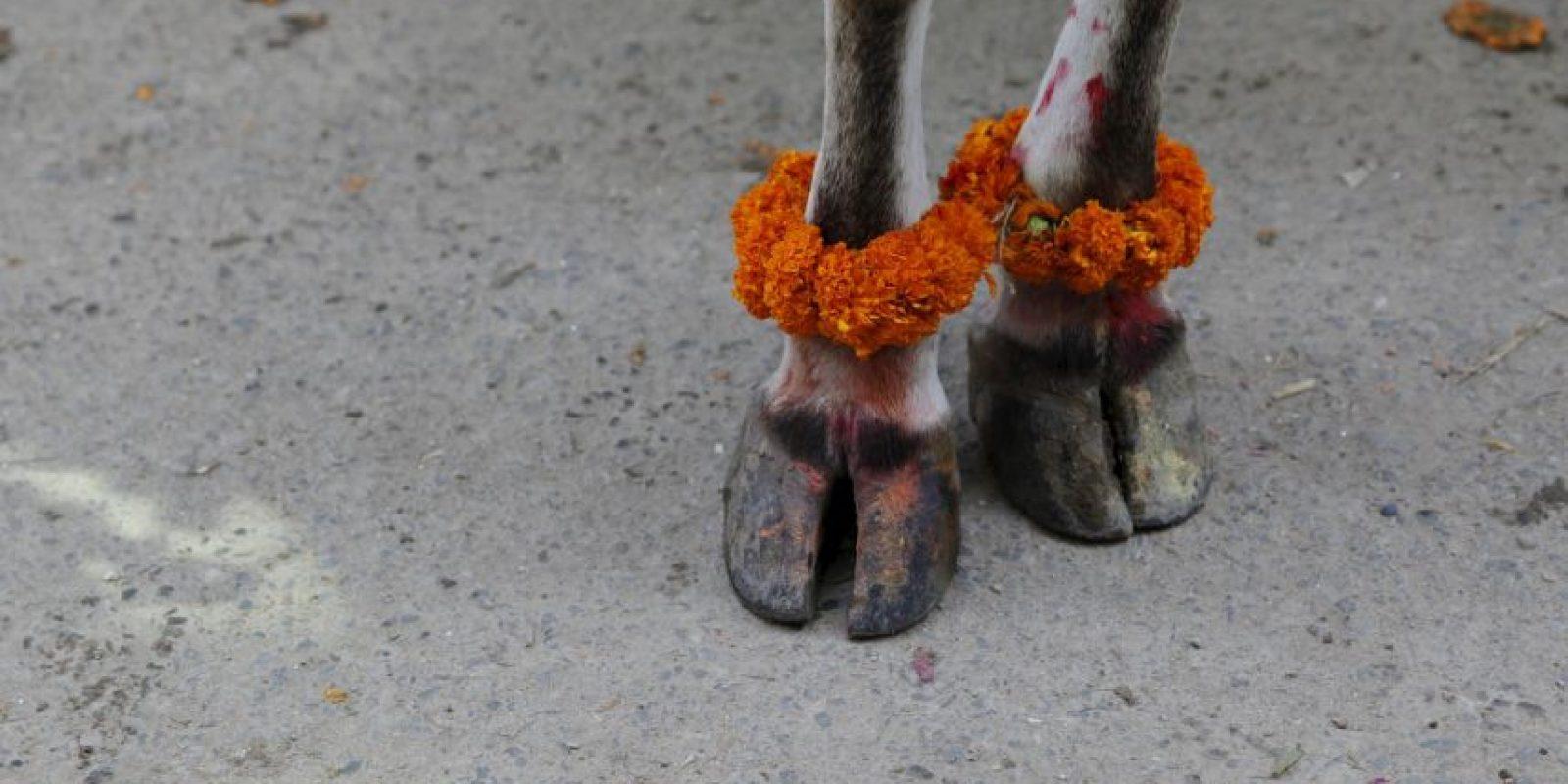 En el que se le rindió tributo a los animales más cercanos a los seres humanos Foto:AP