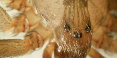 Video: Esta araña cambiando de piel será lo más repulsivo que presenciarán