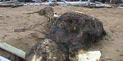 6. En 2006, unos soldados rusos hallaron a una extraña criatura muerta en la línea costera de Sajalin. Su esqueleto no parecía el de un reptil, y definitivamente no era un mamífero, informó el portal EnglishRussia. Foto:Vía Youtube