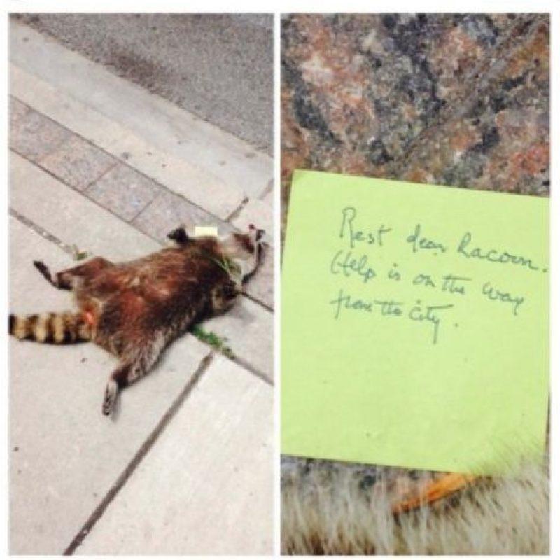 Cerca de las 9 AM, Jason Wagar denunció que había un mapache muerto en la banqueta, frente a una iglesia. Foto:Vía Twitter.com/KrisReports