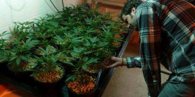 6. Jamaica: Se despenalizó la posesión y es legar tener hasta cinco plantas Foto:AFP