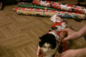 Envolviendo al gato de regalo Foto:Know Your Meme