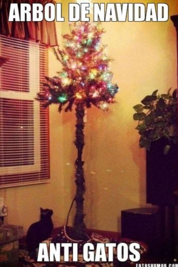 Perfecto árbol anti-gatos Foto: Know Your Meme