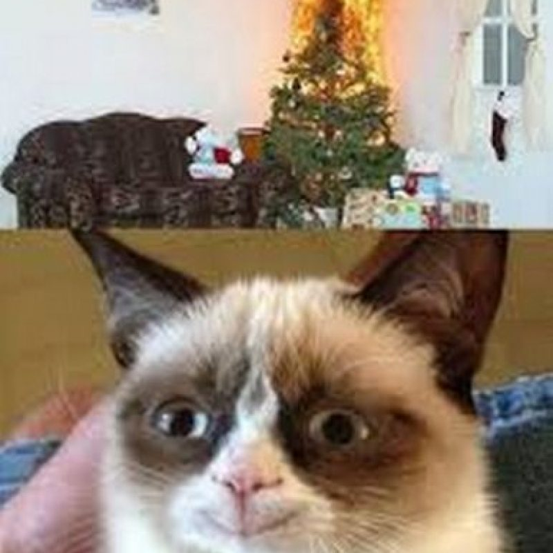¡Esto es lo que imaginan todos los gatos! Foto:Know Your Meme